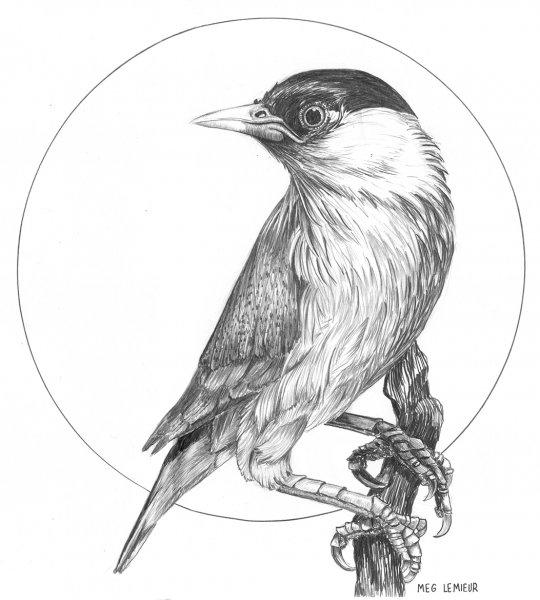 Bird In Circle